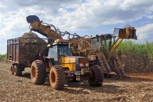 Sugarcane mechanized harvest operation