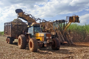 Sugarcane mechanized harvest operation