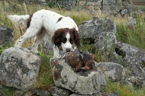 Two_grouse_'picked'_after_the_previous_day's_shoot._-_geograph.org.uk_-_547403
